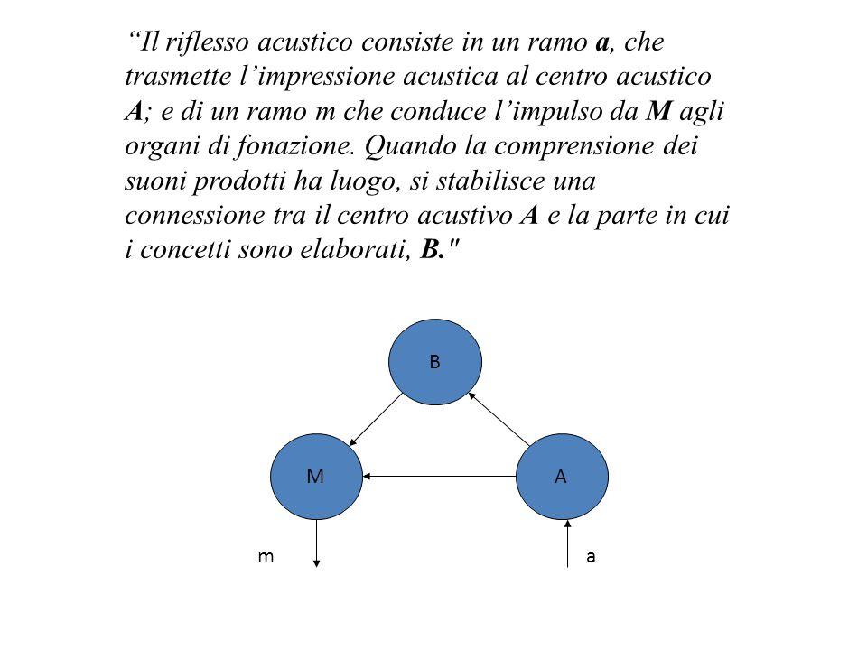 """""""Il riflesso acustico consiste in un ramo a, che trasmette l'impressione acustica al centro acustico A; e di un ramo m che conduce l'impulso da M agli"""