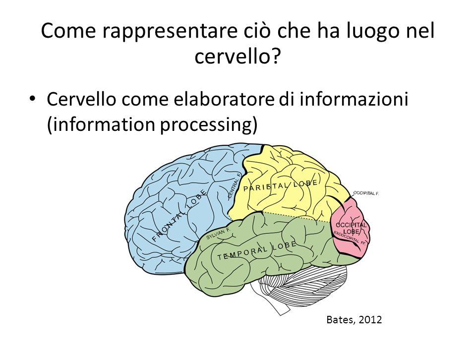 Come rappresentare ciò che ha luogo nel cervello? Cervello come elaboratore di informazioni (information processing) Bates, 2012