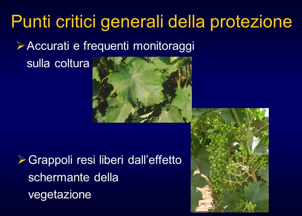  Accurati e frequenti monitoraggi sulla coltura Punti critici generali della protezione  Grappoli resi liberi dall'effetto schermante della vegetazi
