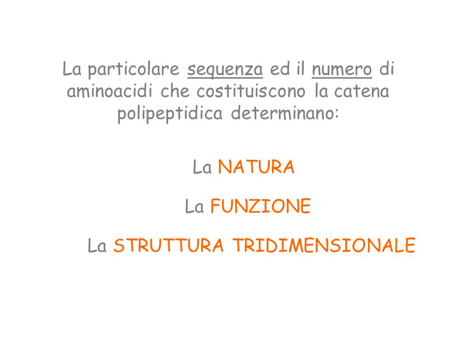 La particolare sequenza ed il numero di aminoacidi che costituiscono la catena polipeptidica determinano: La NATURA La FUNZIONE La STRUTTURA TRIDIMENSIONALE