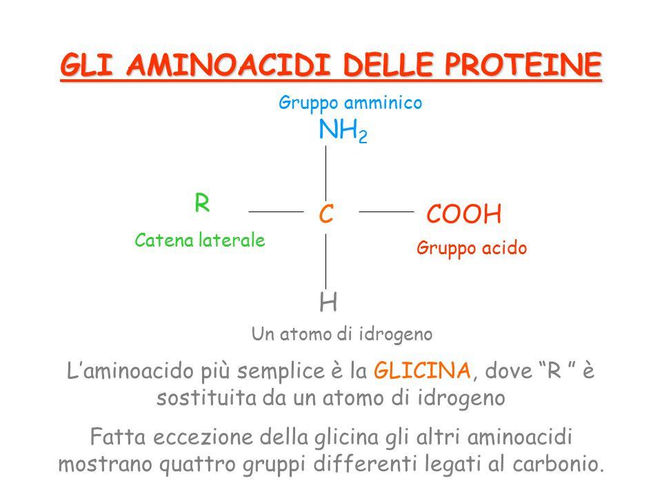 L'aminoacido più semplice è la GLICINA, dove R è sostituita da un atomo di idrogeno Fatta eccezione della glicina gli altri aminoacidi mostrano quattro gruppi differenti legati al carbonio.