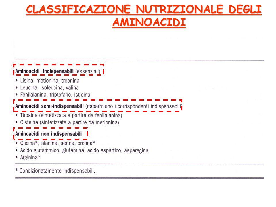 CLASSIFICAZIONE NUTRIZIONALE DEGLI AMINOACIDI