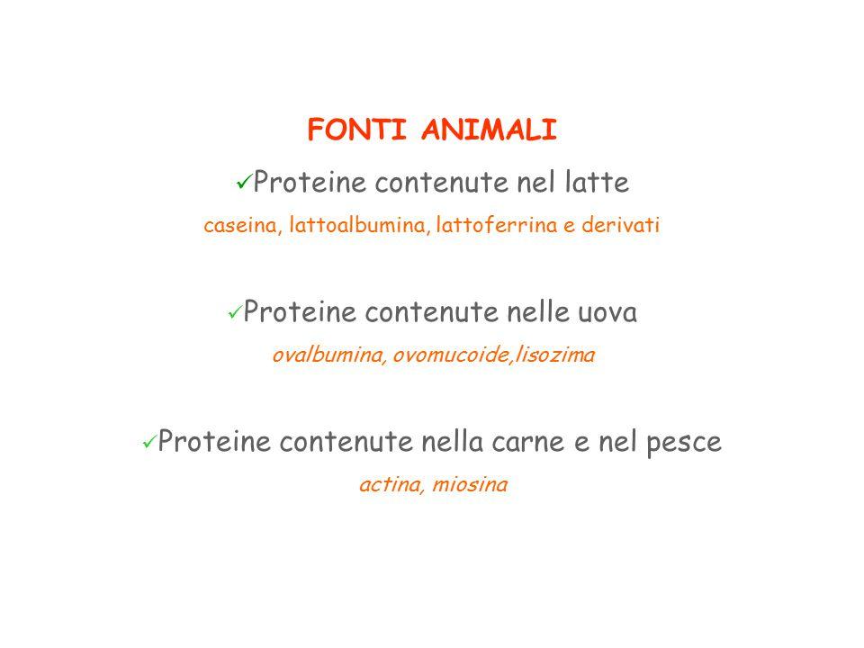 FONTI ANIMALI Proteine contenute nel latte caseina, lattoalbumina, lattoferrina e derivati Proteine contenute nelle uova ovalbumina, ovomucoide,lisozima Proteine contenute nella carne e nel pesce actina, miosina