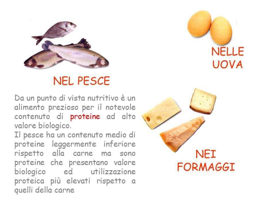 NEI FORMAGGI NELLE UOVA NEL PESCE Da un punto di vista nutritivo è un alimento prezioso per il notevole contenuto di proteine ad alto valore biologico.