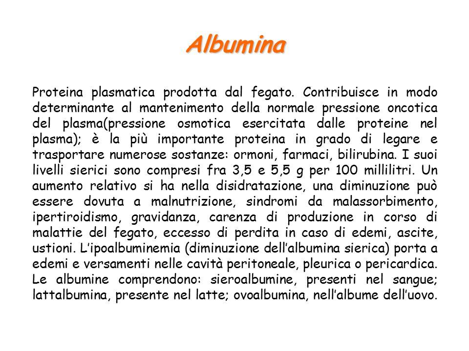 Albumina Proteina plasmatica prodotta dal fegato.
