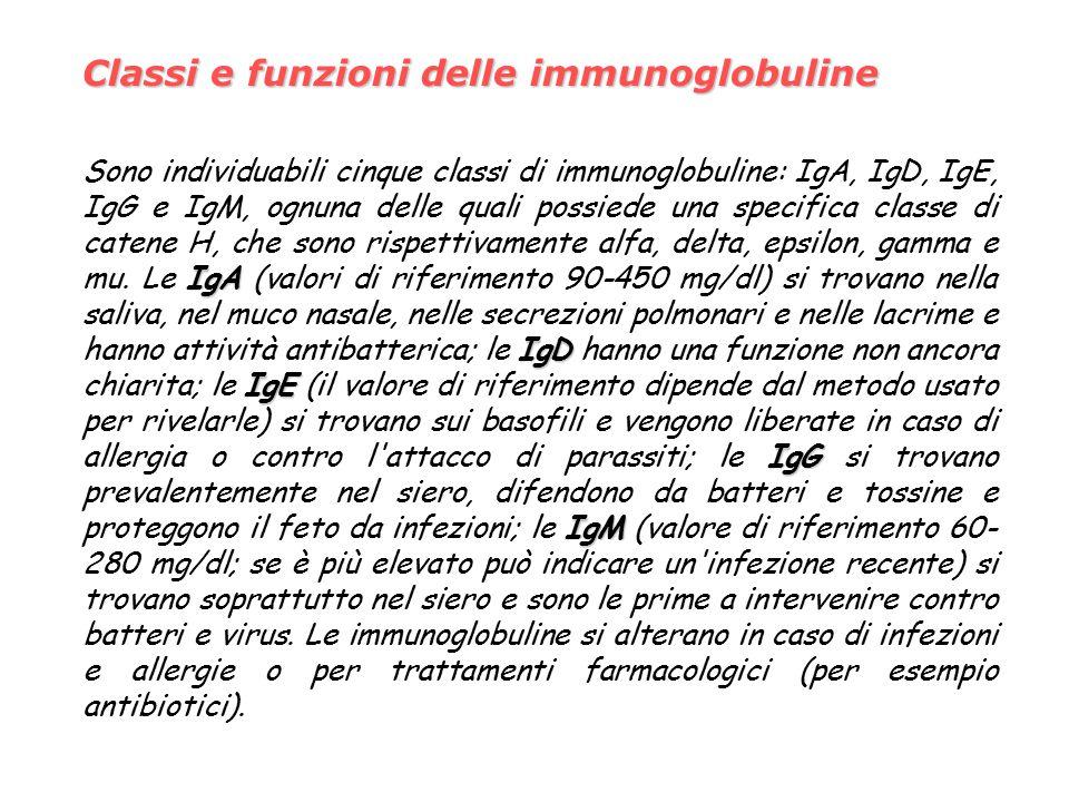 Classi e funzioni delle immunoglobuline IgA IgD IgE IgG IgM Sono individuabili cinque classi di immunoglobuline: IgA, IgD, IgE, IgG e IgM, ognuna delle quali possiede una specifica classe di catene H, che sono rispettivamente alfa, delta, epsilon, gamma e mu.