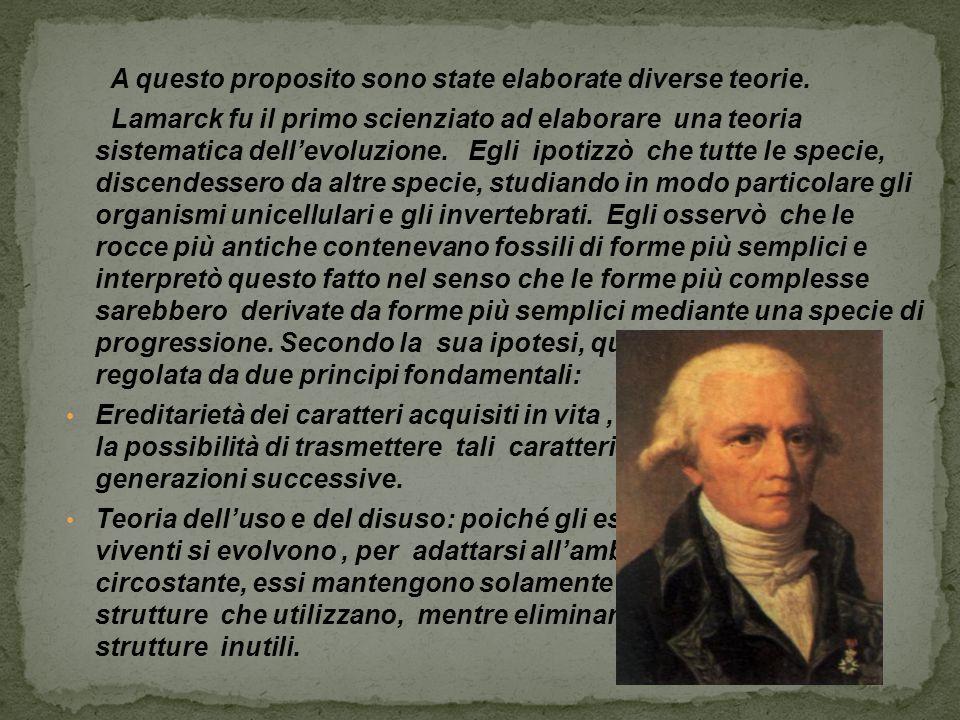 A questo proposito sono state elaborate diverse teorie. Lamarck fu il primo scienziato ad elaborare una teoria sistematica dell'evoluzione. Egli ipoti