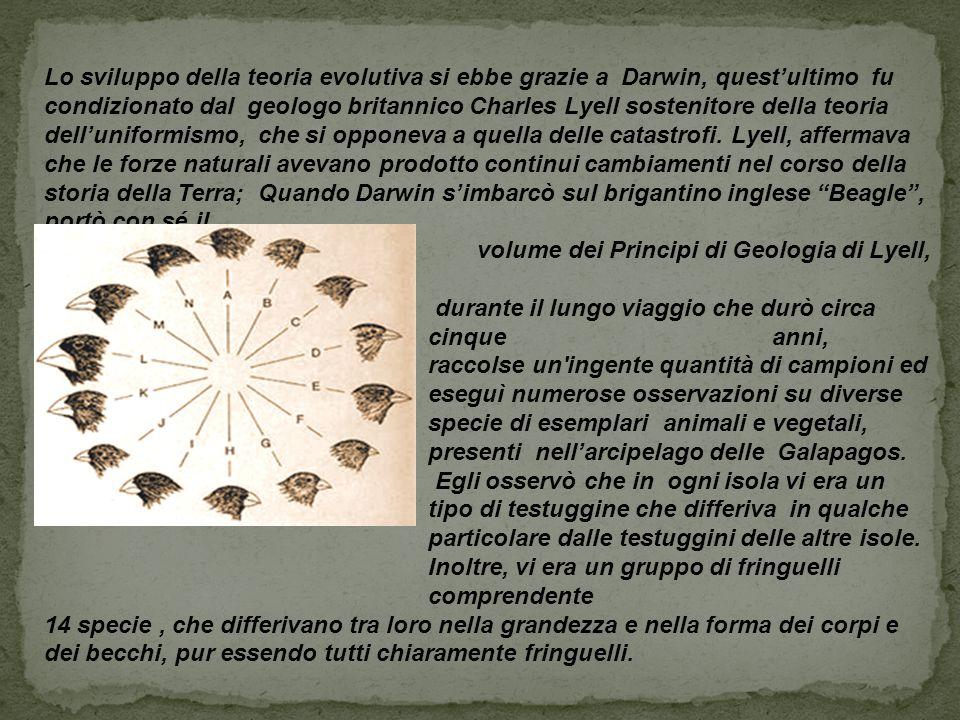 Lo sviluppo della teoria evolutiva si ebbe grazie a Darwin, quest'ultimo fu condizionato dal geologo britannico Charles Lyell sostenitore della teoria