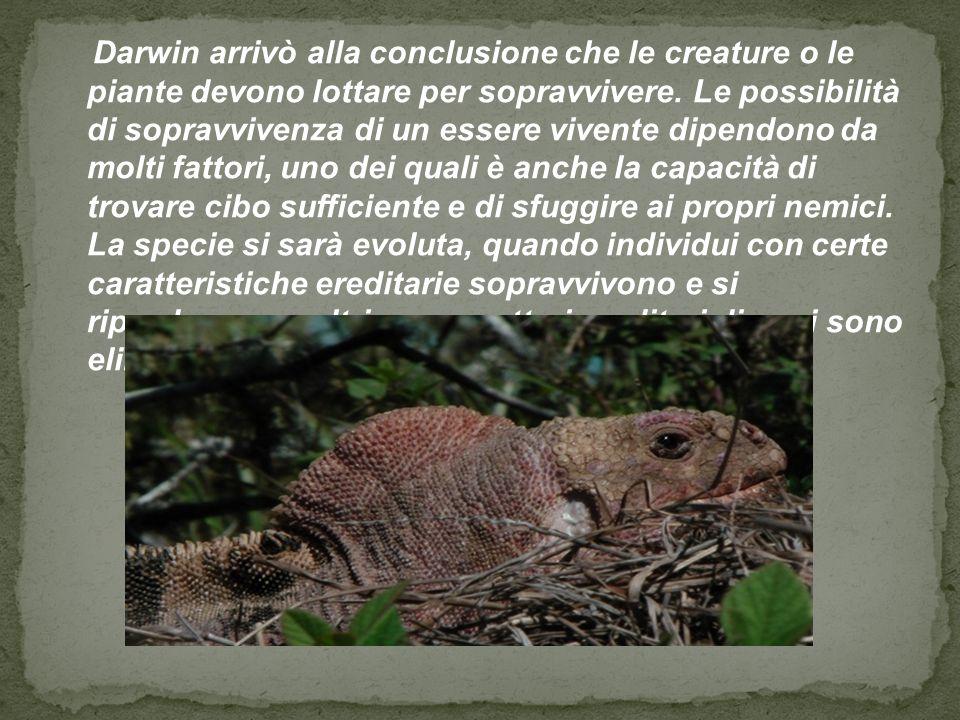Darwin arrivò alla conclusione che le creature o le piante devono lottare per sopravvivere. Le possibilità di sopravvivenza di un essere vivente dipen