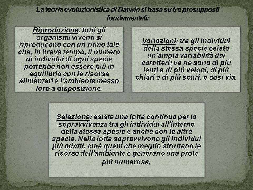 La differenza fondamentale tra la formulazione di Darwin e quella di ogni altro predecessore è il ruolo centrale delle variazioni.