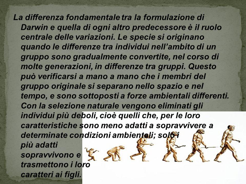La differenza fondamentale tra la formulazione di Darwin e quella di ogni altro predecessore è il ruolo centrale delle variazioni. Le specie si origin