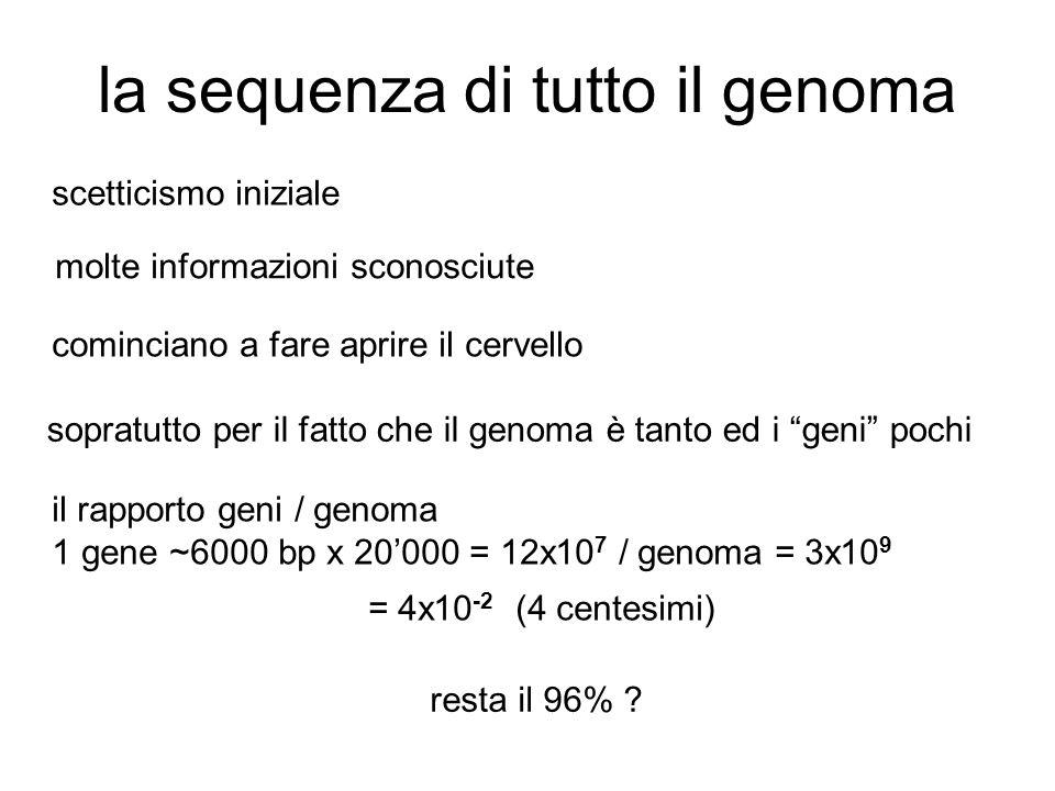 la sequenza di tutto il genoma scetticismo iniziale molte informazioni sconosciute cominciano a fare aprire il cervello sopratutto per il fatto che il genoma è tanto ed i geni pochi il rapporto geni / genoma 1 gene ~6000 bp x 20'000 = 12x10 7 / genoma = 3x10 9 = 4x10 -2 (4 centesimi) resta il 96%