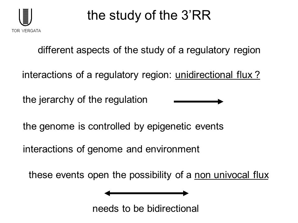 the study of the 3'RR different aspects of the study of a regulatory region interactions of a regulatory region: unidirectional flux ? the jerarchy of