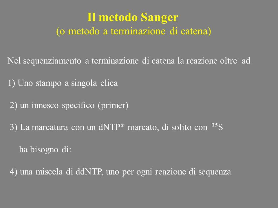 Il metodo Sanger (o metodo a terminazione di catena) Nel sequenziamento a terminazione di catena la reazione oltre ad 1) Uno stampo a singola elica 2)