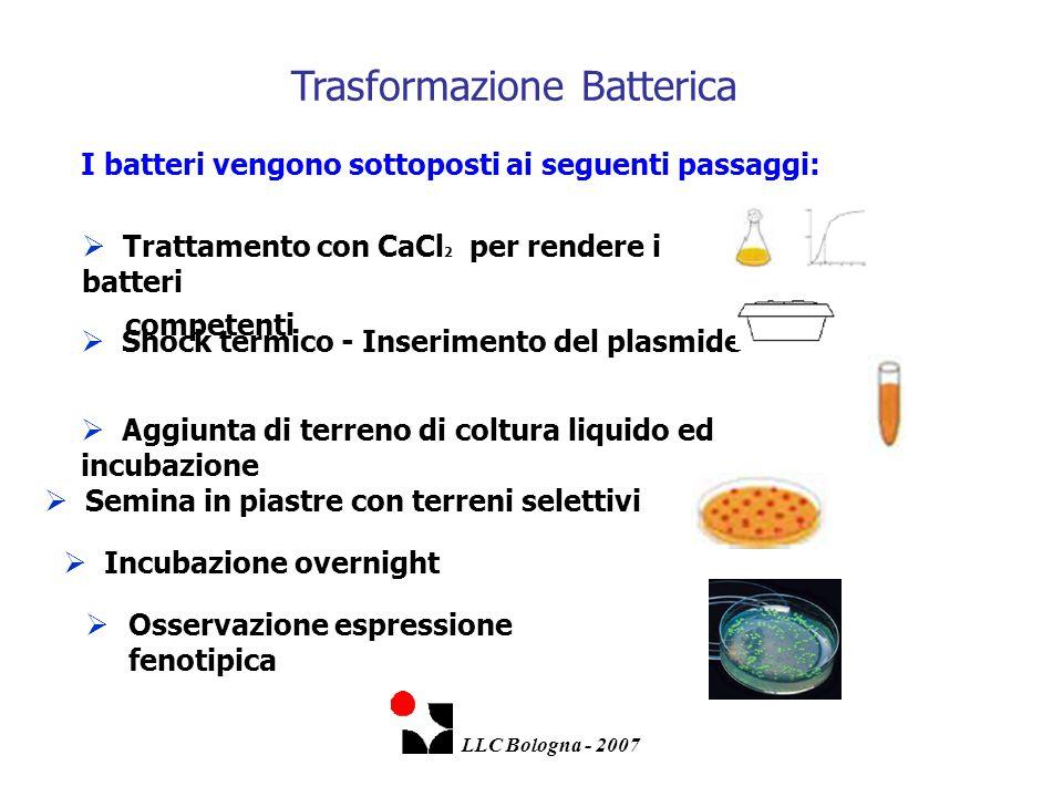 Trasformazione Batterica  Osservazione espressione fenotipica I batteri vengono sottoposti ai seguenti passaggi: LLC Bologna - 2007  Trattamento con
