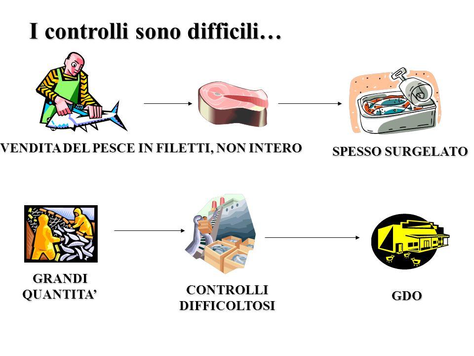 I controlli sono difficili… GRANDI QUANTITA' CONTROLLI DIFFICOLTOSI GDO VENDITA DEL PESCE IN FILETTI, NON INTERO SPESSO SURGELATO