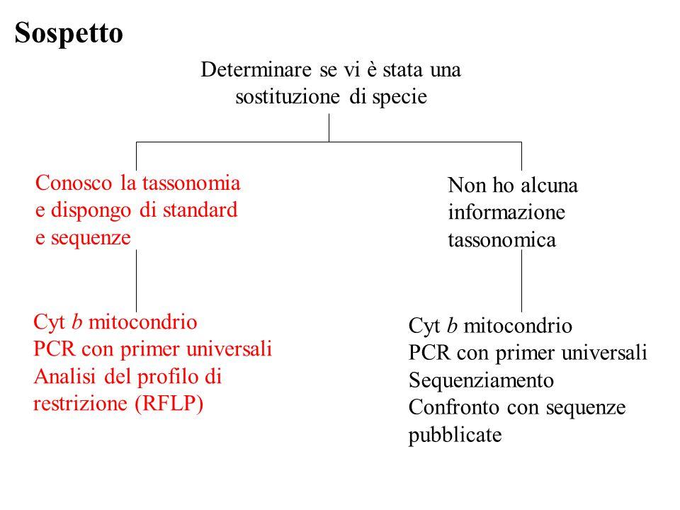 Sospetto Determinare se vi è stata una sostituzione di specie Conosco la tassonomia e dispongo di standard e sequenze Cyt b mitocondrio PCR con primer