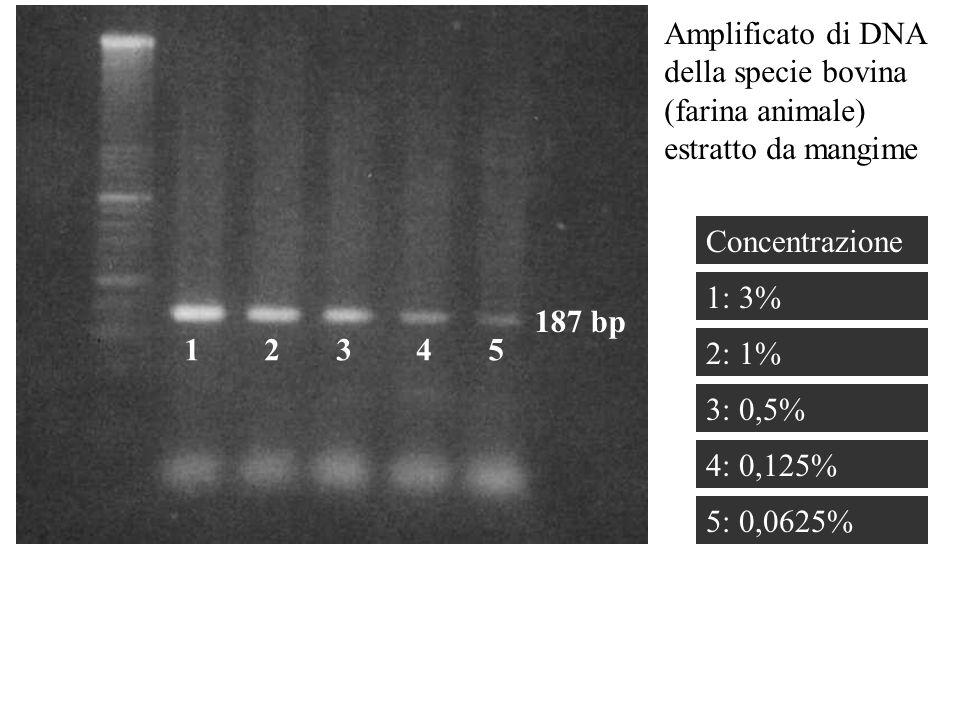 1 2 3 4 5 Amplificato di DNA della specie bovina (farina animale) estratto da mangime 1: 3% 4: 0,125% 187 bp 5: 0,0625% 3: 0,5% 2: 1% Concentrazione