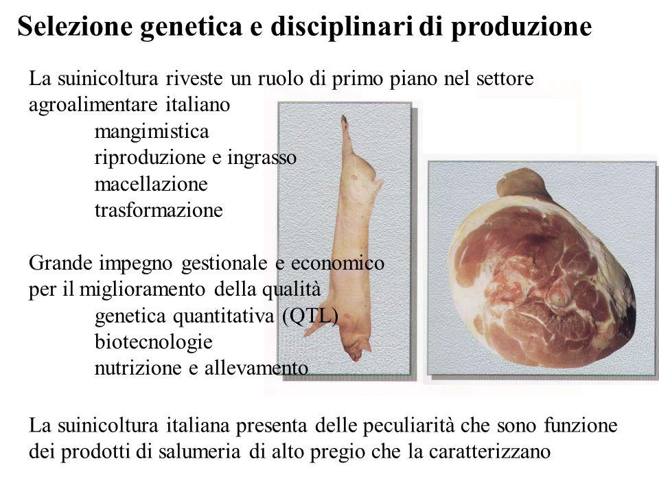 Selezione genetica e disciplinari di produzione La suinicoltura riveste un ruolo di primo piano nel settore agroalimentare italiano mangimistica ripro