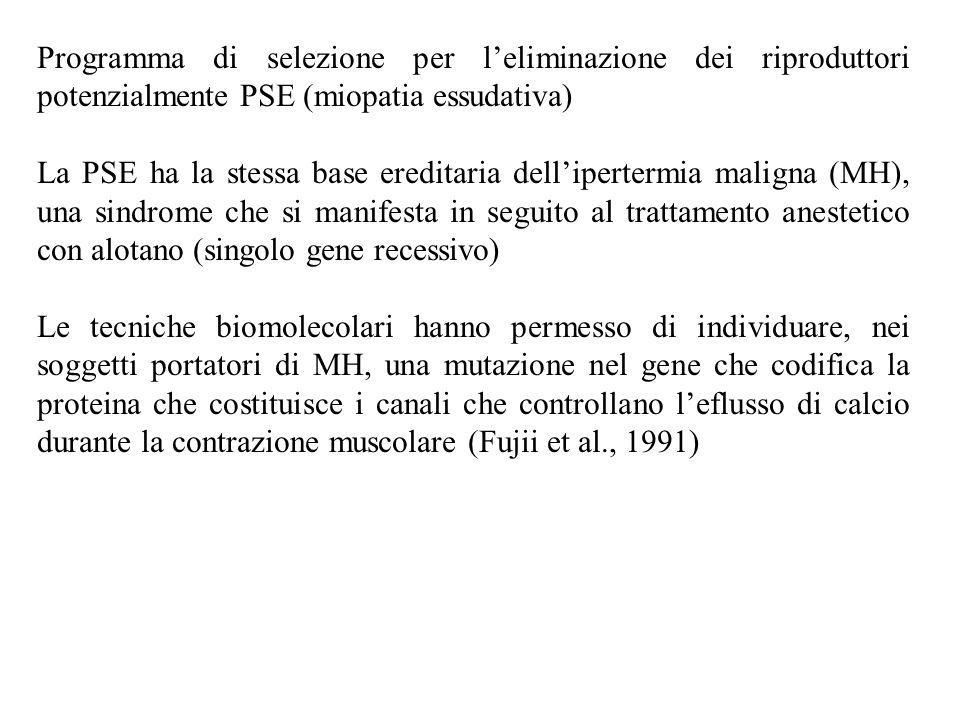 Programma di selezione per l'eliminazione dei riproduttori potenzialmente PSE (miopatia essudativa) La PSE ha la stessa base ereditaria dell'ipertermi