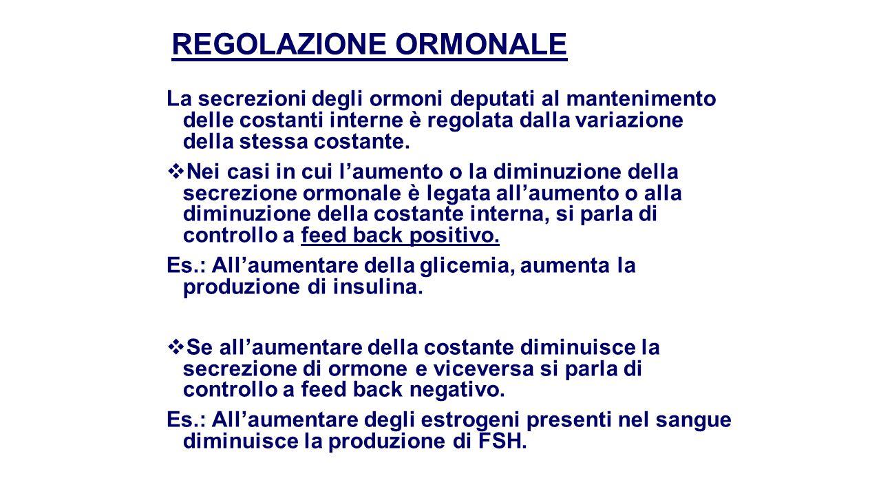 FEED – BACK POSITIVO PANCREAS INSULINA GLUCOSIO BASALE + GLUCOSIO - GLUCOSIO stimola + insulina deprime - insulina