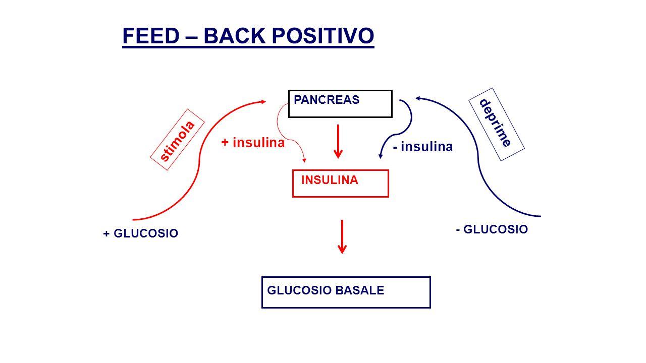 FEED – BACK NEGATIVO IPOFISI FSH FOLLICOLO OVARICO ESTROGENI BASALI - ESTROGENI + ESTROGENI stimola + FSH deprime - FSH