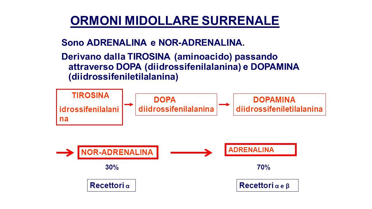 AZIONE ORMONI MIDOLLARE SURRENE Adrenalina e nor-adrenalina sono dei neurotrasmettitori e agiscono su tutte le cellule attraverso recettori denominati α e β, aventi azioni simili.