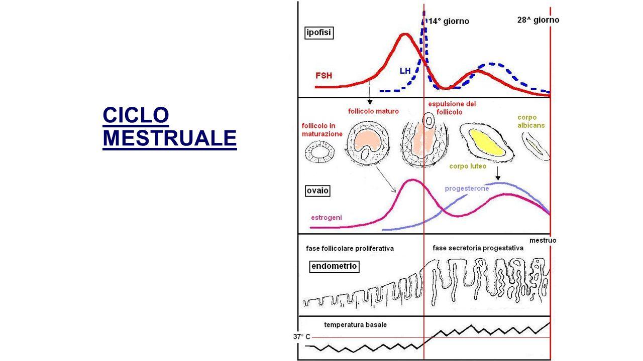 SIGLE ORMONI ACTHAdrenoCorticoTropic H.ADHAntiDiuretic H.