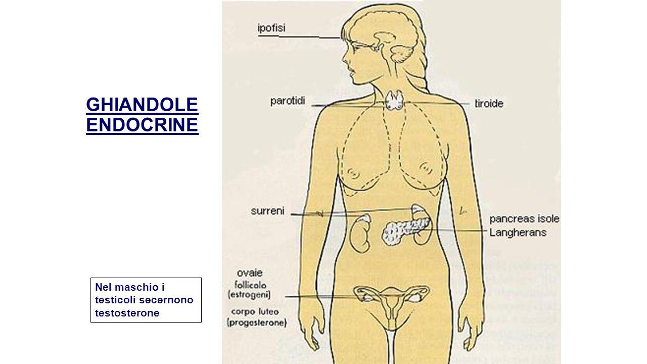 CLASSI DI ORMONI Gli ormoni appartengono a tre classi biochimiche:  Ormoni peptidici: formati da catene di aminoacidi.
