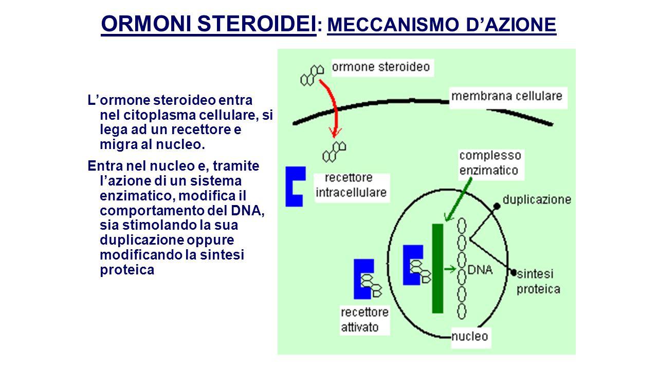 DERIVATI DA FENILALANINA  Dalla fenilalanina derivano gli ormoni tiroidei che superano la membrana cellulare, la membrana nucleare e la membrana mitocondriale.