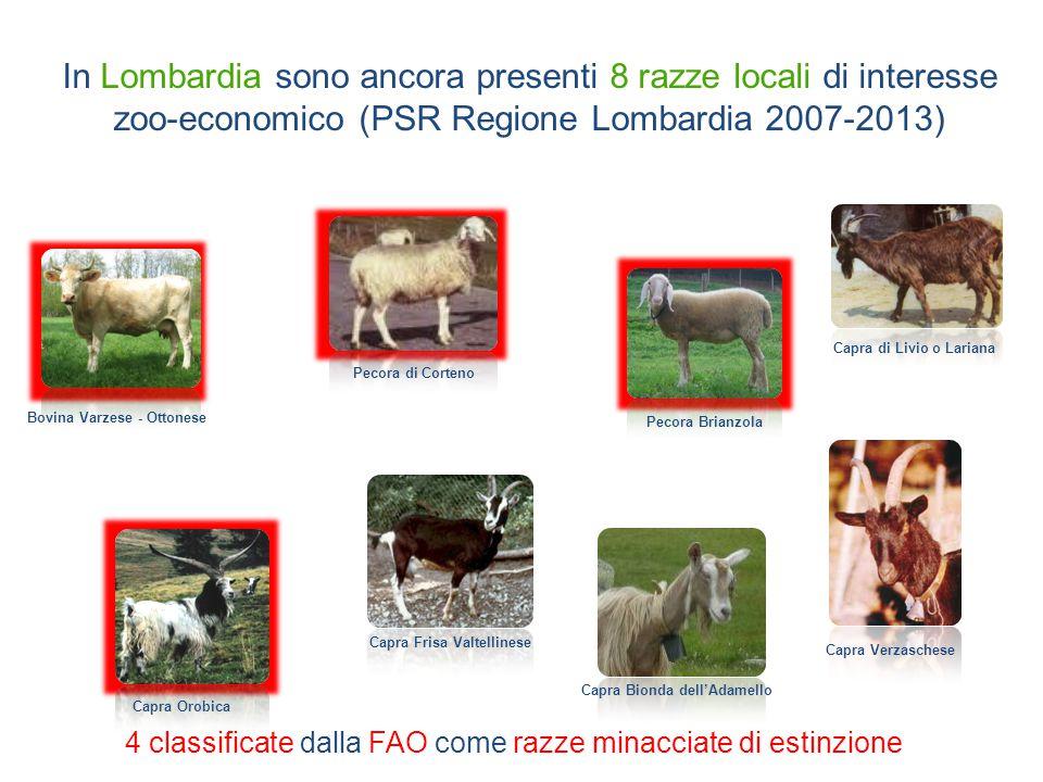 Ad oggi nella Banca è stoccato materiale di 5 tori di razza Varzese 9 arieti di razza Brianzola 1200 dosi207 dosi Banca delle Risorse Genetiche Animali Lombarde Lombardia Animal Bank - LABank