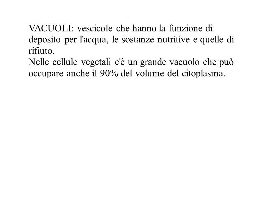 VACUOLI: vescicole che hanno la funzione di deposito per l'acqua, le sostanze nutritive e quelle di rifiuto. Nelle cellule vegetali c'è un grande vacu