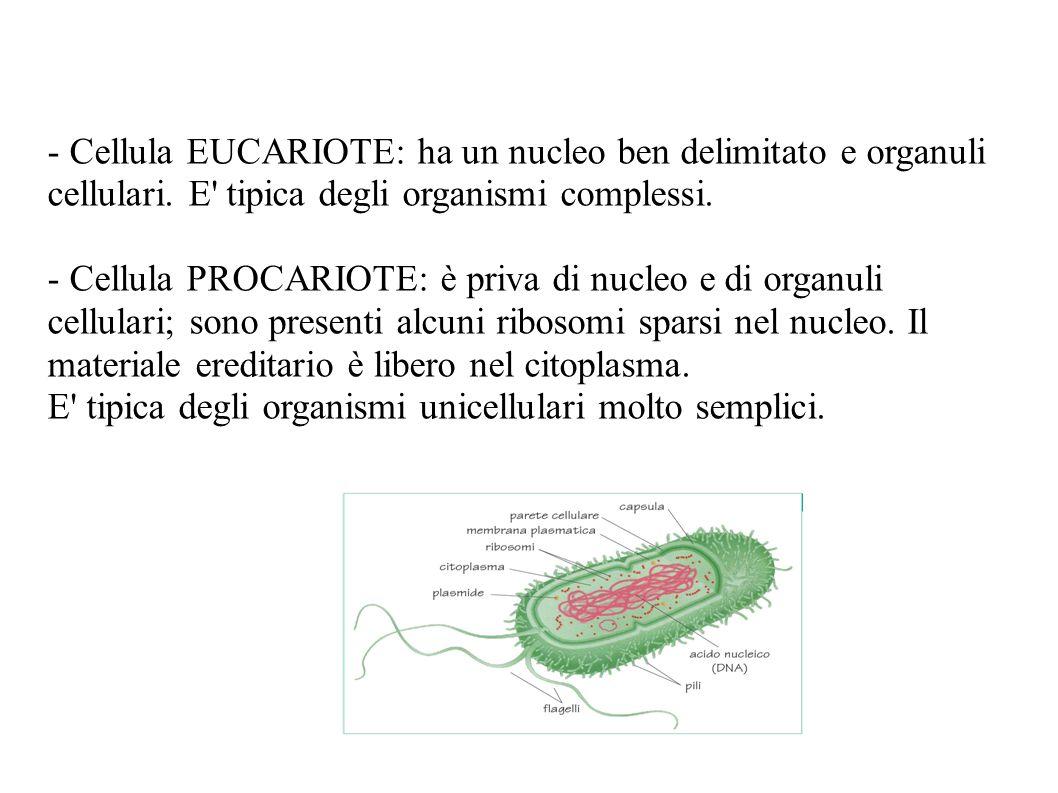 - Cellula EUCARIOTE: ha un nucleo ben delimitato e organuli cellulari. E' tipica degli organismi complessi. - Cellula PROCARIOTE: è priva di nucleo e