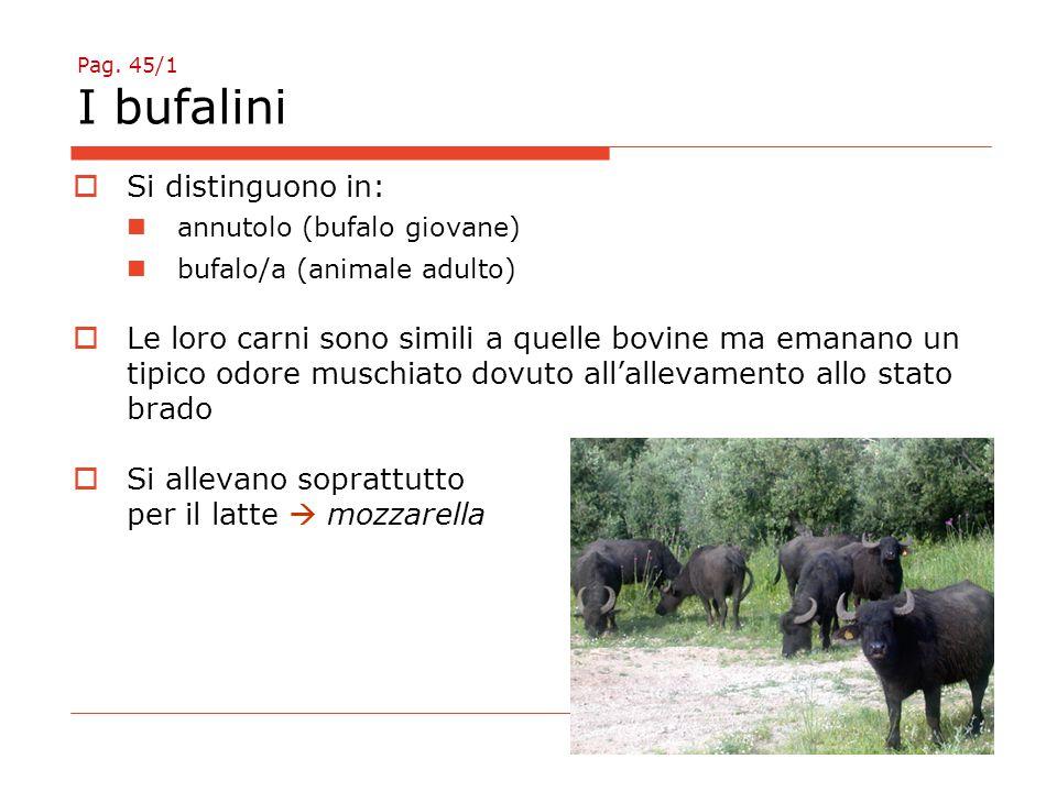 Pag. 45/1 I bufalini  Si distinguono in: annutolo (bufalo giovane) bufalo/a (animale adulto)  Le loro carni sono simili a quelle bovine ma emanano u