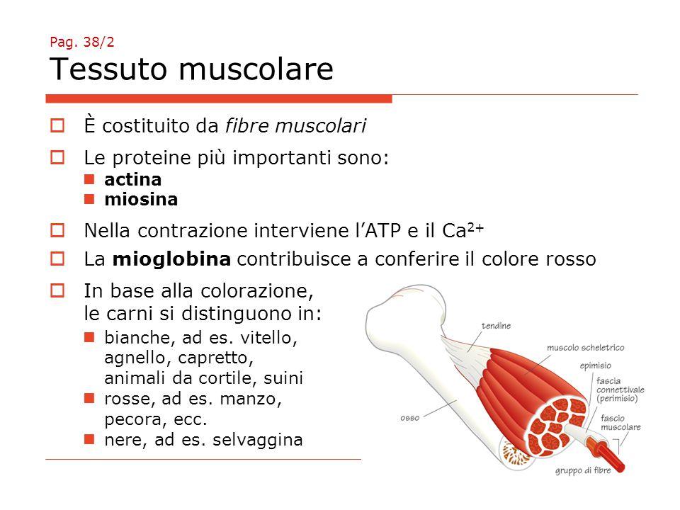 Pag. 38/2 Tessuto muscolare  È costituito da fibre muscolari  Le proteine più importanti sono: actina miosina  Nella contrazione interviene l'ATP e