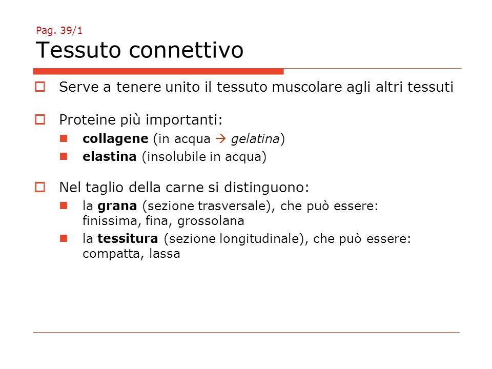 Pag. 39/1 Tessuto connettivo  Serve a tenere unito il tessuto muscolare agli altri tessuti  Proteine più importanti: collagene (in acqua  gelatina)