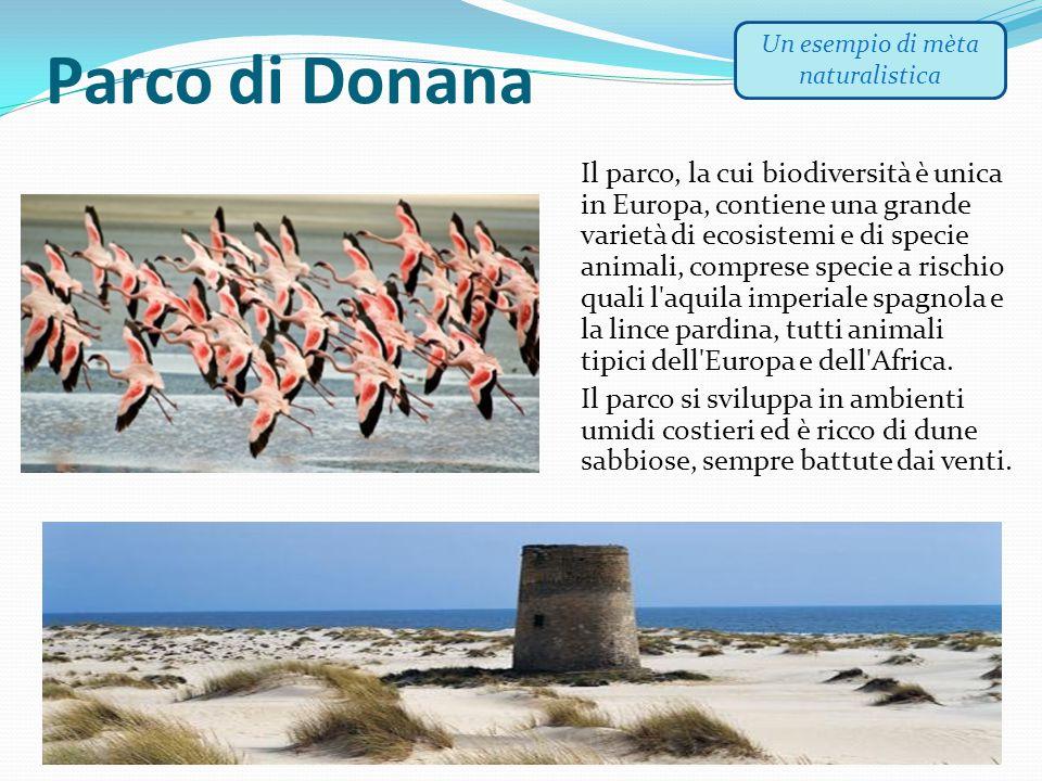 Parco di Donana Il parco, la cui biodiversità è unica in Europa, contiene una grande varietà di ecosistemi e di specie animali, comprese specie a risc