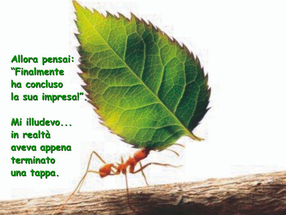 La formica fece molti capitomboli, ma nemmeno questo la fece desistere dalla sua impresa.
