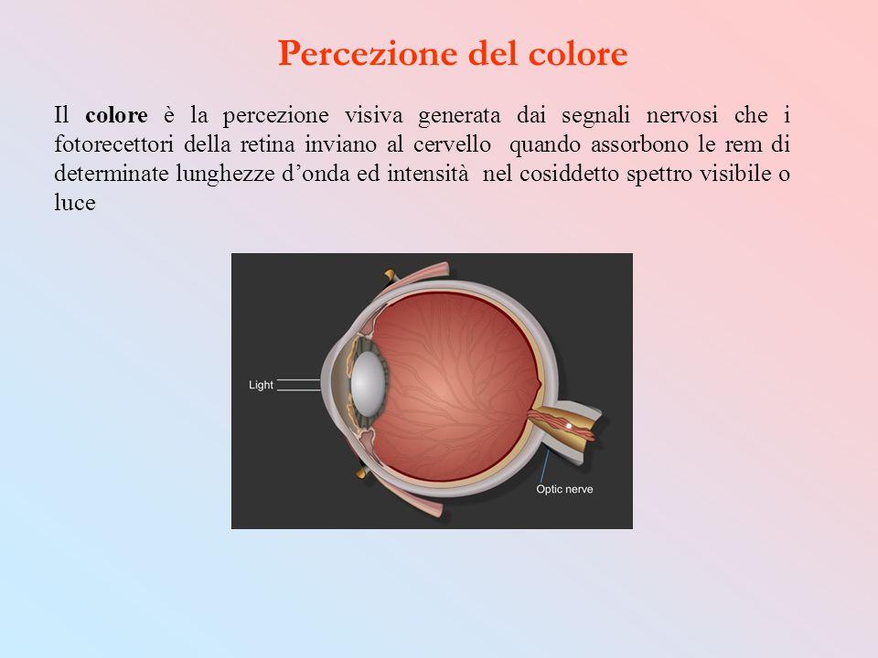 Percezione del colore Il colore è la percezione visiva generata dai segnali nervosi che i fotorecettori della retina inviano al cervello quando assorb