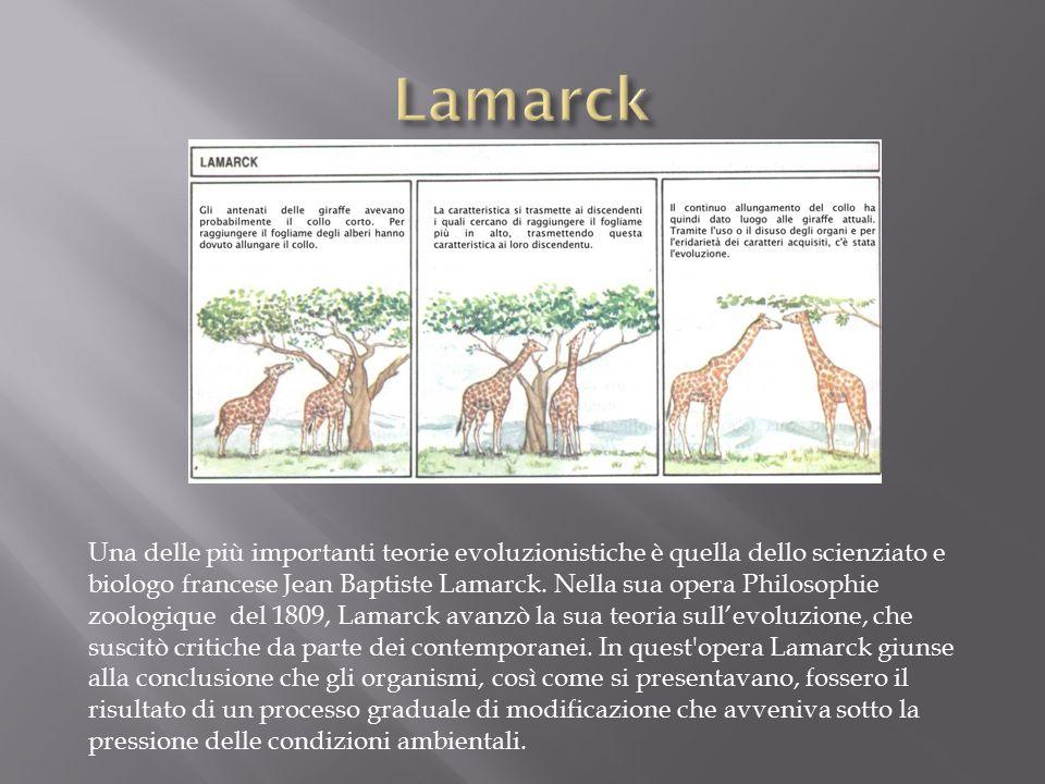 Una delle più importanti teorie evoluzionistiche è quella dello scienziato e biologo francese Jean Baptiste Lamarck.