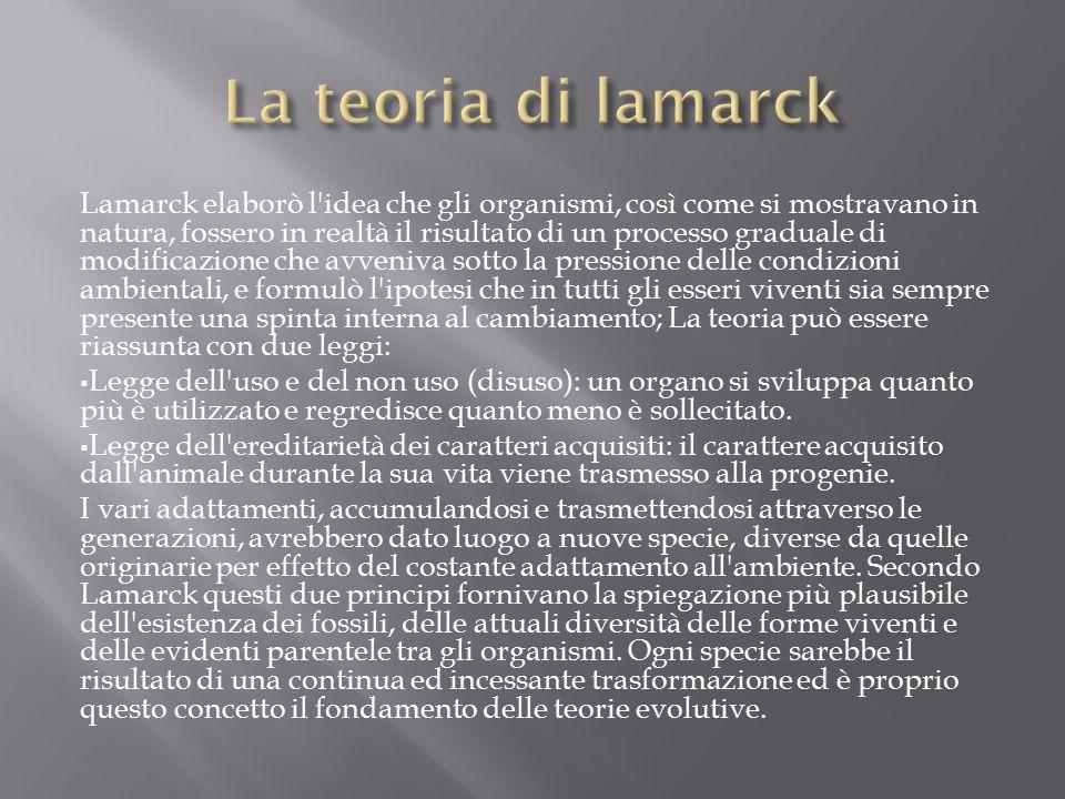 Lamarck elaborò l idea che gli organismi, così come si mostravano in natura, fossero in realtà il risultato di un processo graduale di modificazione che avveniva sotto la pressione delle condizioni ambientali, e formulò l ipotesi che in tutti gli esseri viventi sia sempre presente una spinta interna al cambiamento; La teoria può essere riassunta con due leggi:  Legge dell uso e del non uso (disuso): un organo si sviluppa quanto più è utilizzato e regredisce quanto meno è sollecitato.
