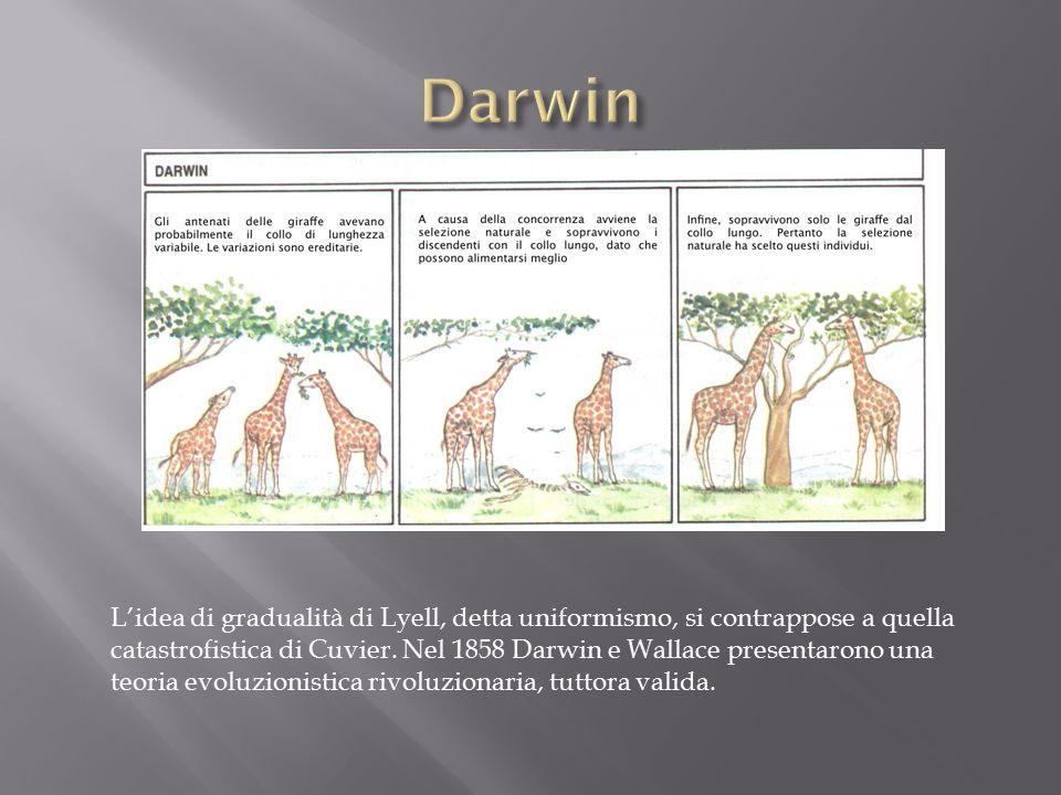 L'idea di gradualità di Lyell, detta uniformismo, si contrappose a quella catastrofistica di Cuvier.