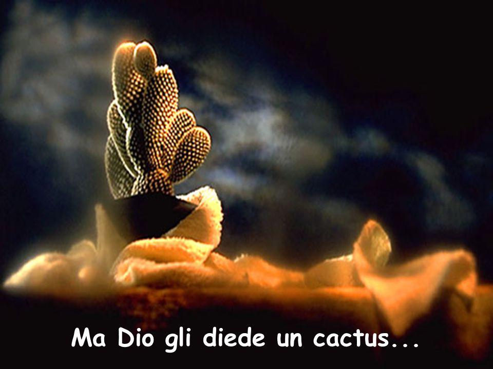 Ma Dio gli diede un cactus...
