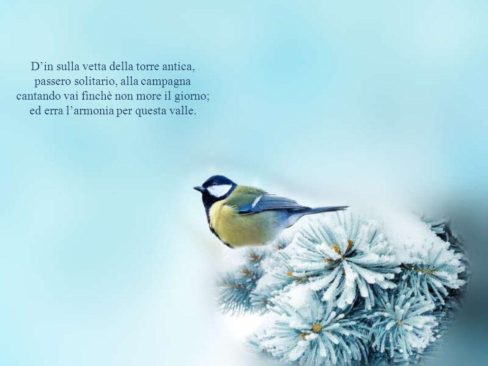 Il passero solitario Poesia di Giacomo Leopardi