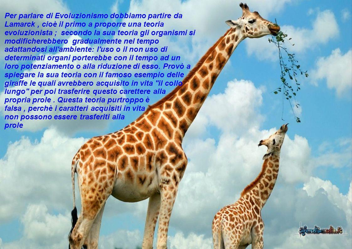 Per parlare di Evoluzionismo dobbiamo partire da Lamarck, cioè il primo a proporre una teoria evoluzionista ; secondo la sua teoria gli organismi si modificherebbero gradualmente nel tempo adattandosi all ambiente: l uso o il non uso di determinati organi porterebbe con il tempo ad un loro potenziamento o alla riduzione di esso.