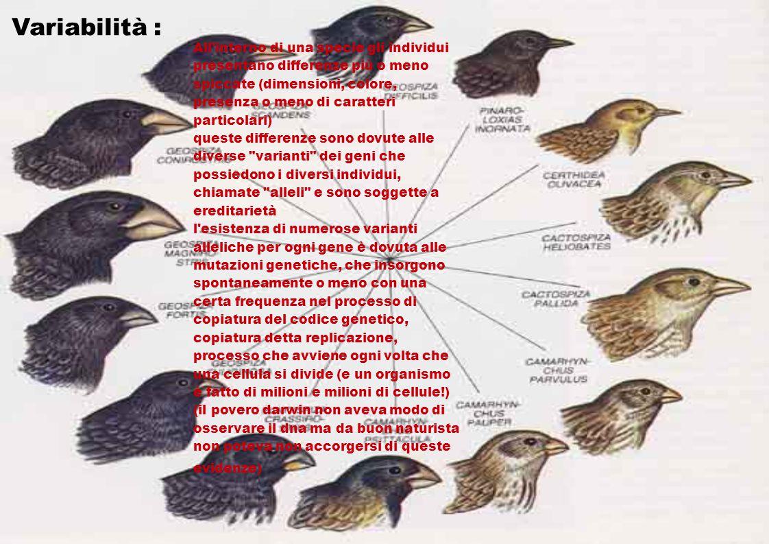 Variabilità : All'interno di una specie gli individui presentano differenze più o meno spiccate (dimensioni, colore, presenza o meno di caratteri part