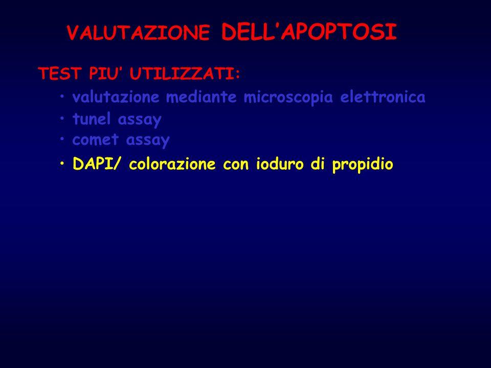 tunel assay TEST PIU' UTILIZZATI: DAPI/ colorazione con ioduro di propidio comet assay valutazione mediante microscopia elettronica VALUTAZIONE DELL'A
