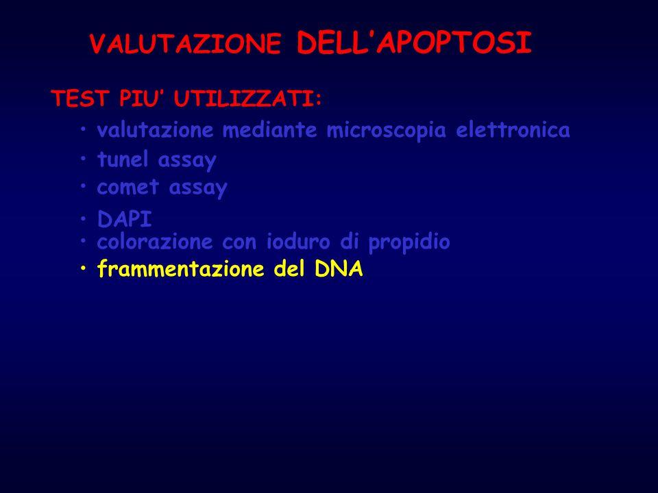 tunel assay colorazione con ioduro di propidio frammentazione del DNA TEST PIU' UTILIZZATI: DAPI comet assay valutazione mediante microscopia elettron
