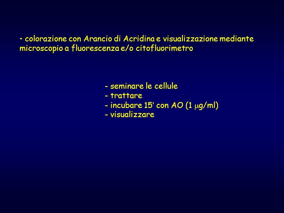 colorazione con Arancio di Acridina e visualizzazione mediante microscopio a fluorescenza e/o citofluorimetro - seminare le cellule - trattare - incub