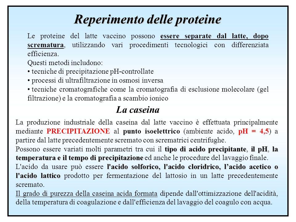 Reperimento delle proteine Le proteine del latte vaccino possono essere separate dal latte, dopo scrematura, utilizzando vari procedimenti tecnologici
